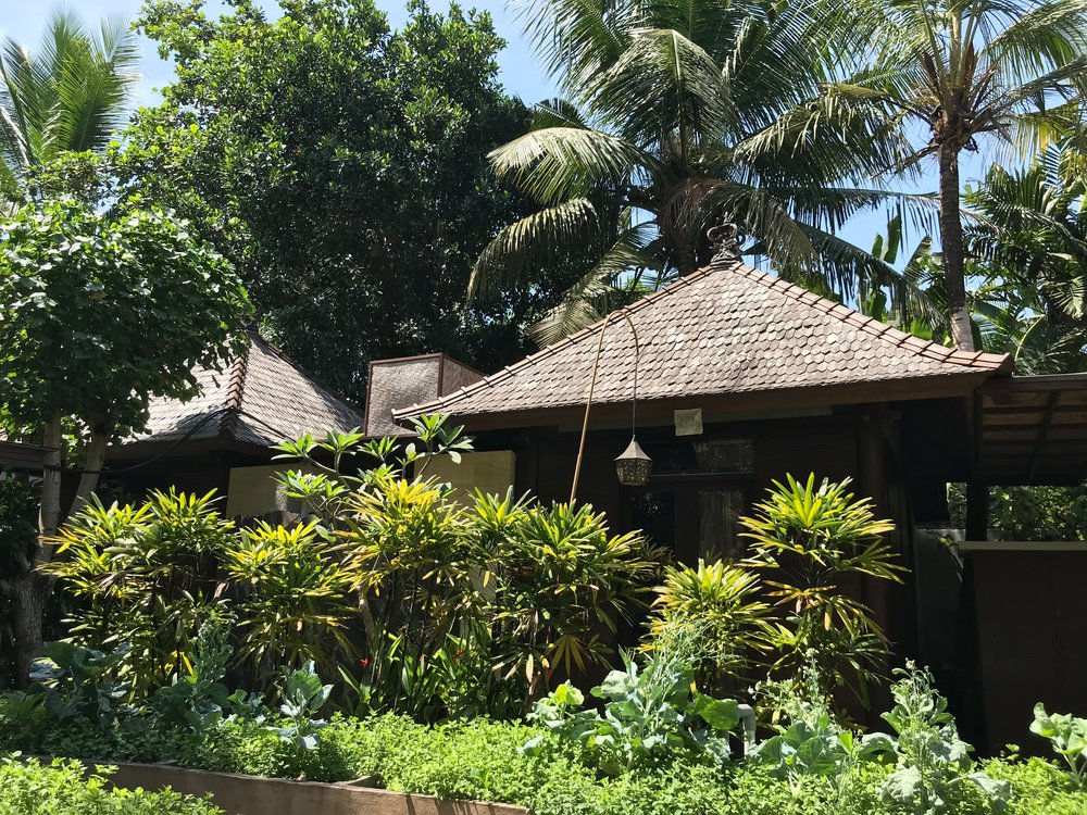 The buildings at Taksu are nestled in lush greenery