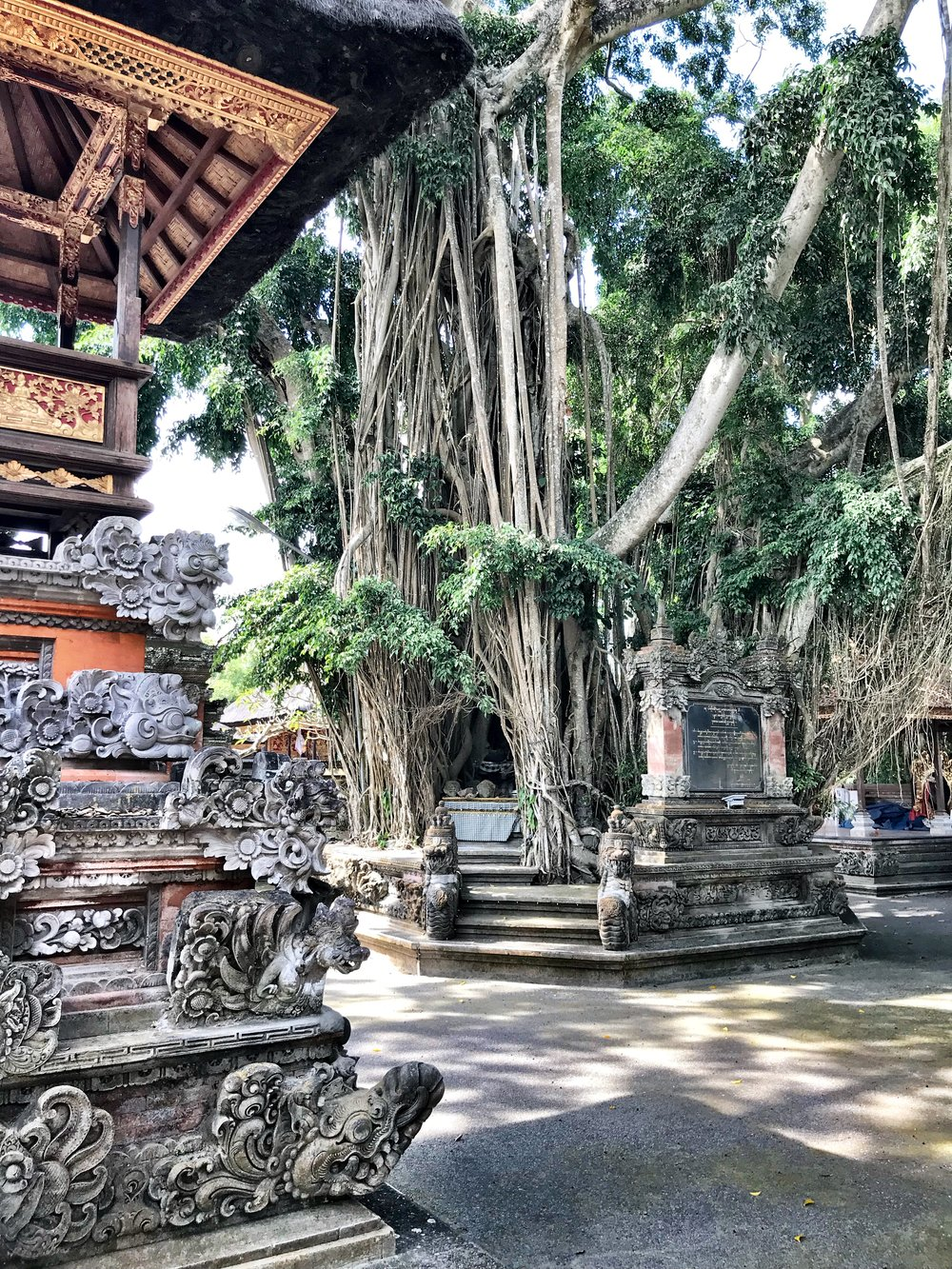 Banyan trees, with their roots that grow from above, are amazing works of nature