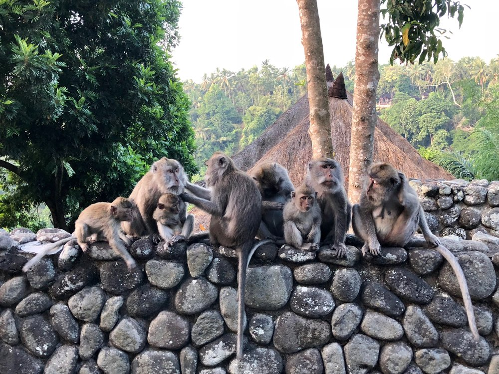 This group of monkeys gathered on the wall outside our room