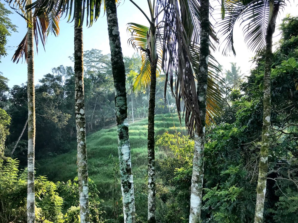 There's lush tropical foliage in every direction you look