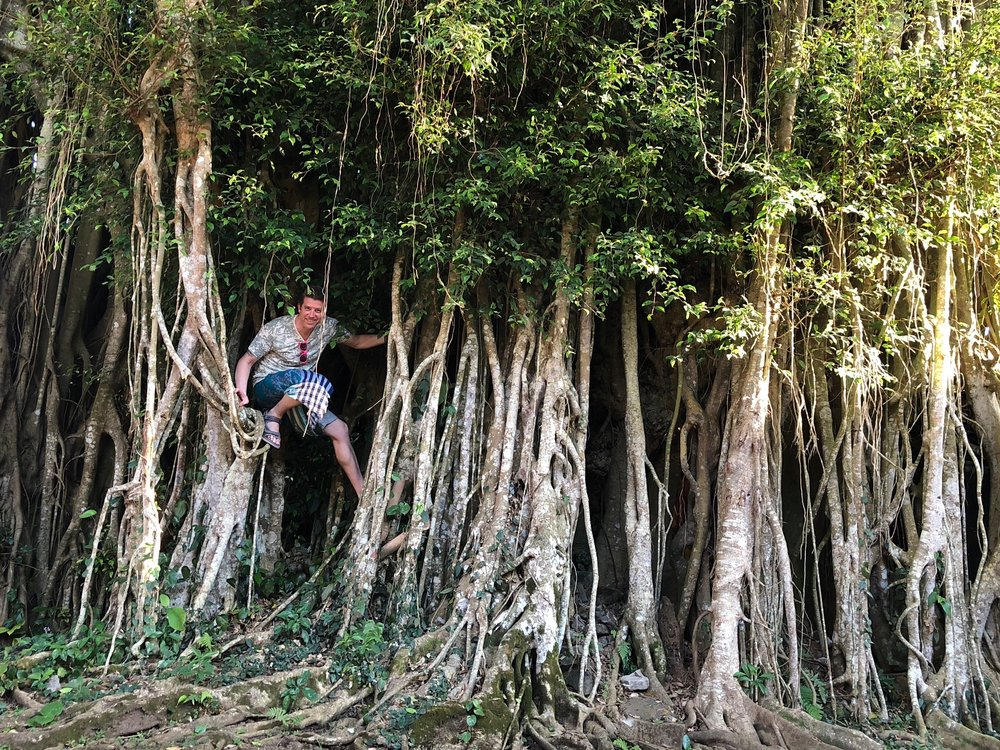 Wally climbs in the roots of the largest banyan tree he's ever seen