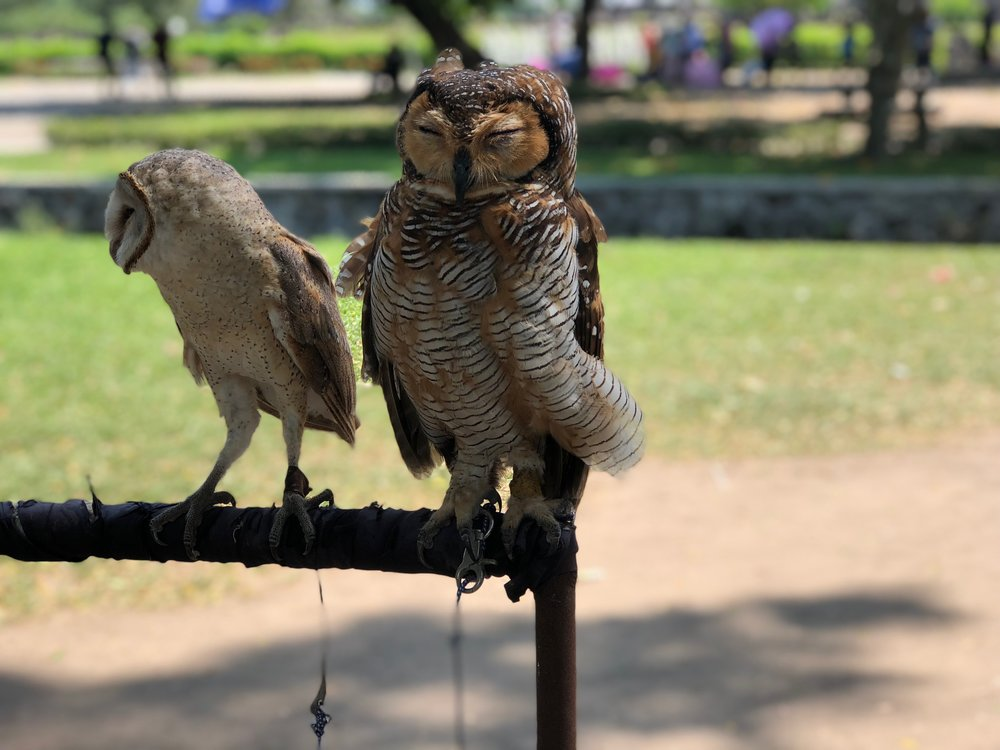 Whooo dat? We were surprised to pass some owls en route to the main temples