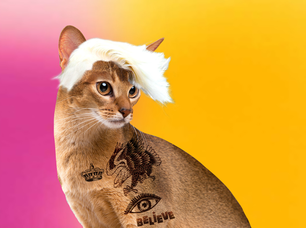 JUSTIN BIEBER CAT.jpg