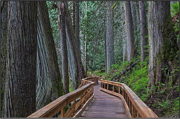 Ancient Forest Boardwalk, Prince George