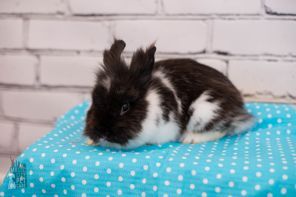 Bunny One