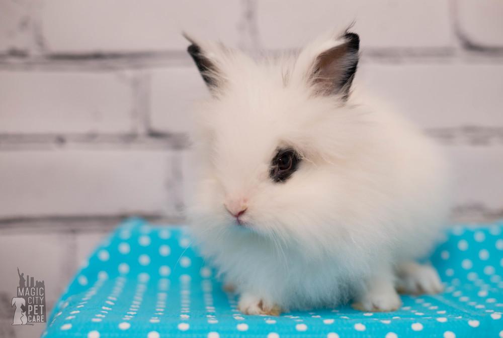 Bunny Three