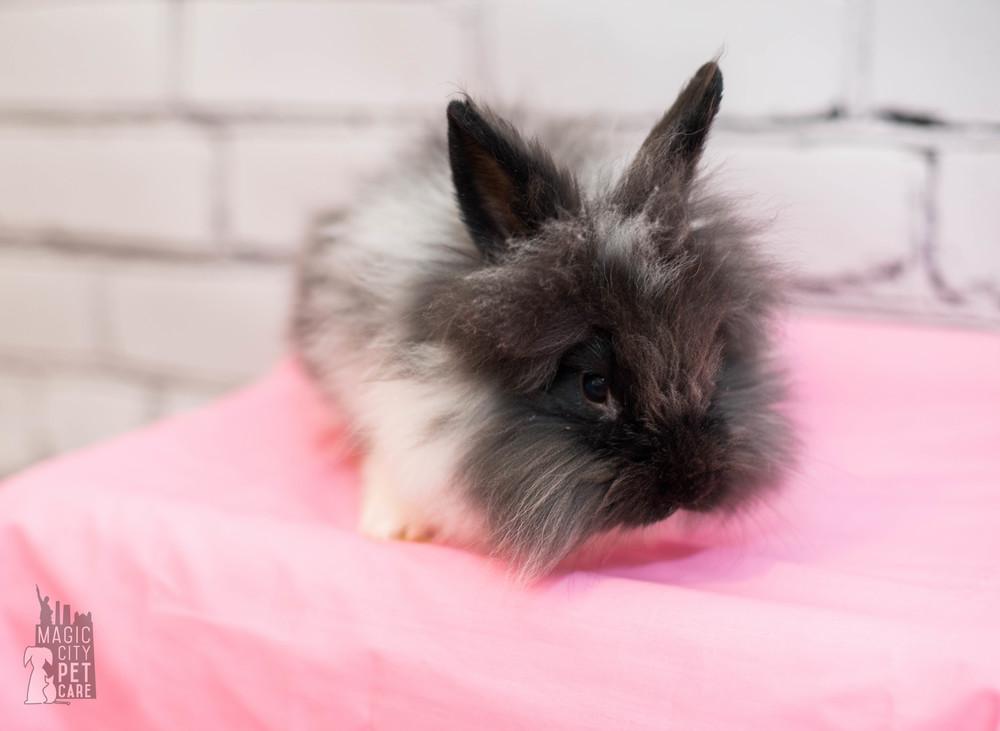 Bunny Five