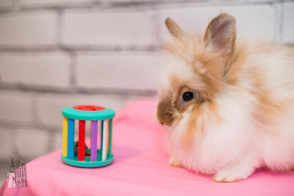 Bunny Six