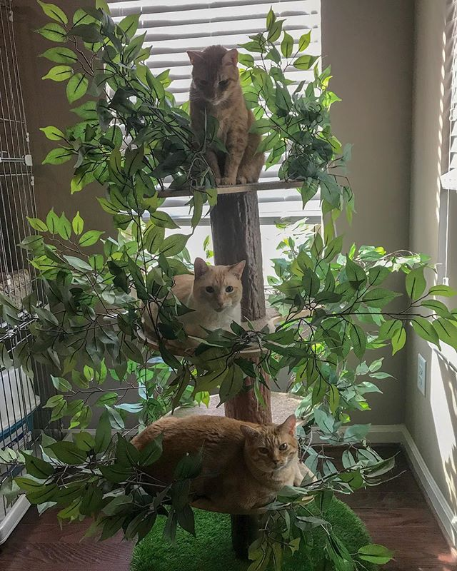 Be sure to provide your orange cat tree with plenty of sun and water to produce the happiest of cats 😸