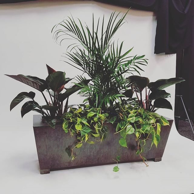 Our newest edition to the modern/industrial line. This beautiful planter box was finished in my personal favorite color and Colorado town #durango  #modernindustrial #modernrustic #planterbox #planter #indoorplanter