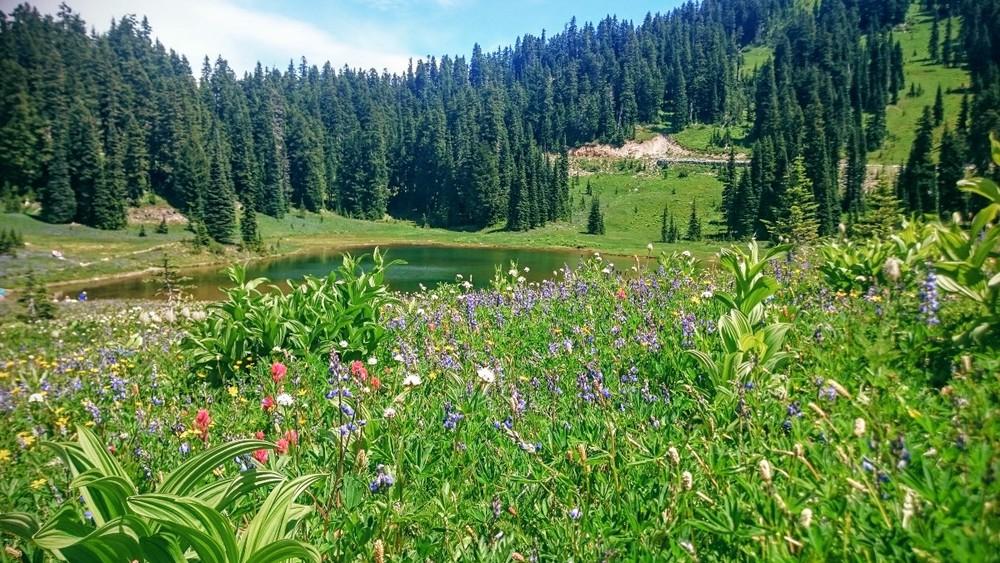 Tipsoo Lake in Mt. Rainier National Park