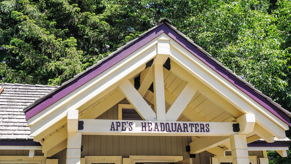 Ape's Headquarters