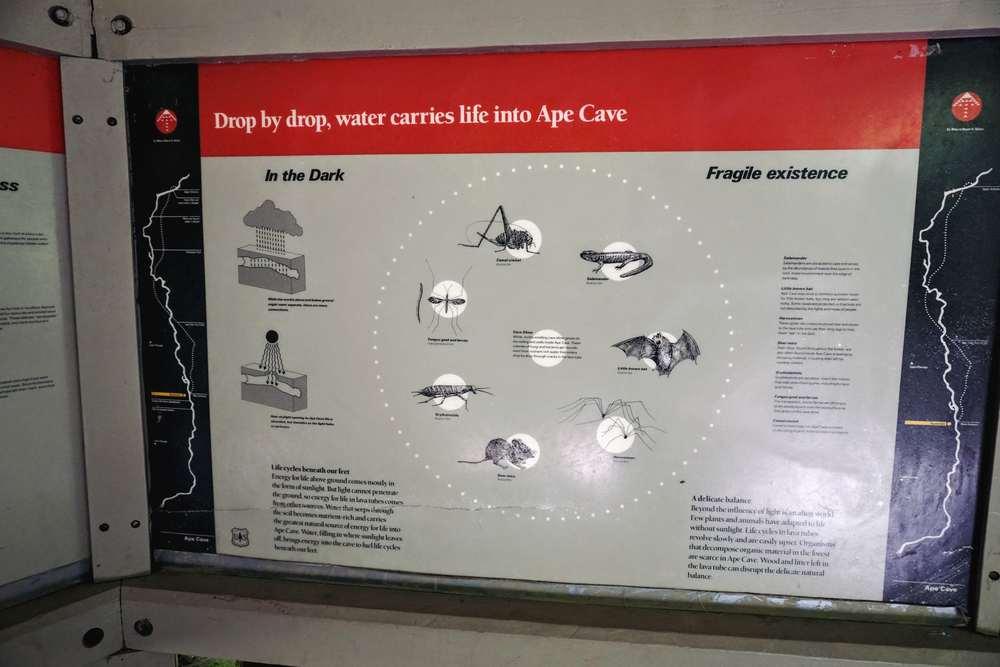 Ape Cave Info Board 2
