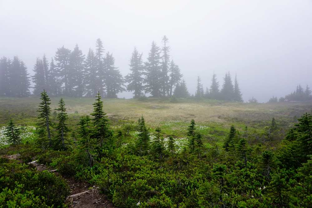 Fog Over the Meadow at Summit Lake