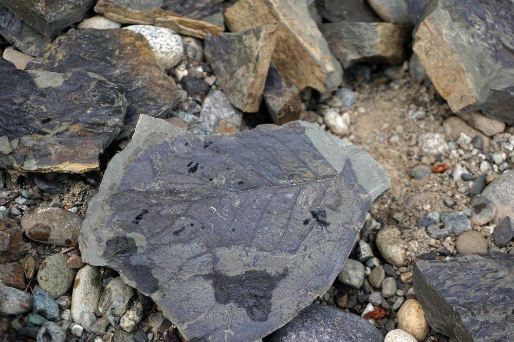 Racehorse+Landslide+Area+Fossil+01.jpg