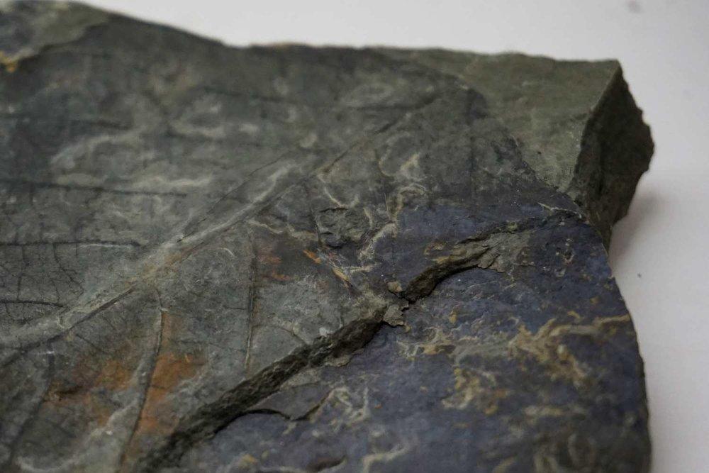 Racehorse+Landslide+Fossil+06.jpg