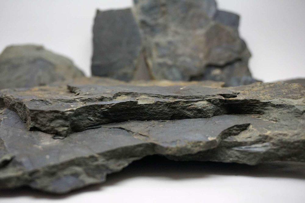 Racehorse+Landslide+Fossil+05.jpg