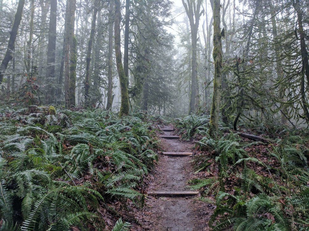 Squak Mountain State Park 10 - Pacific North Wanderers.jpg