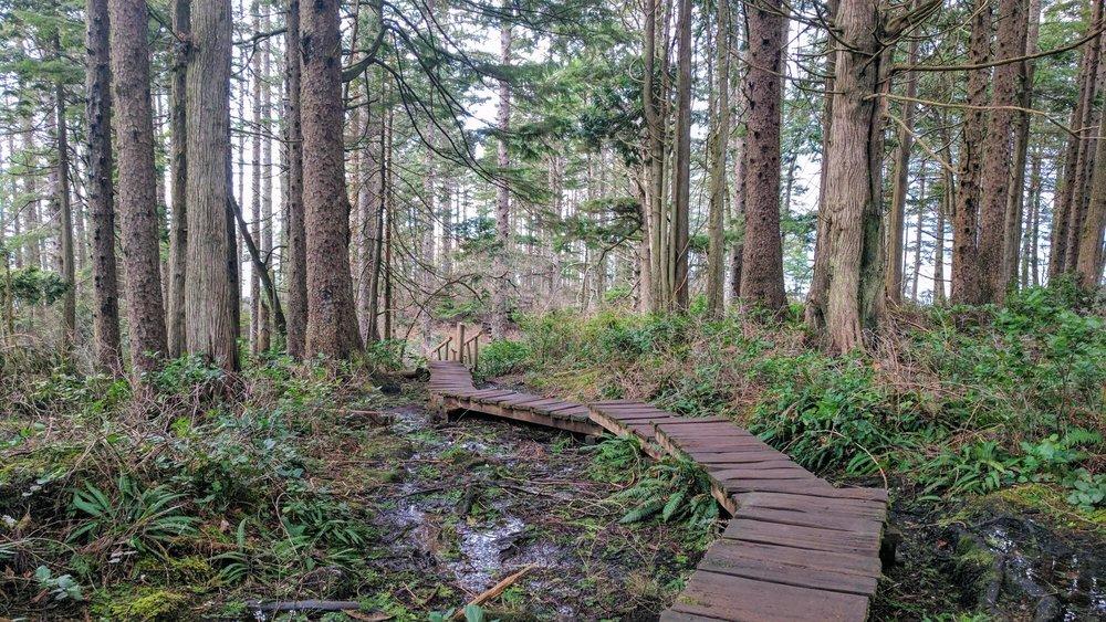Boardwalks of Cape Flattery Trail