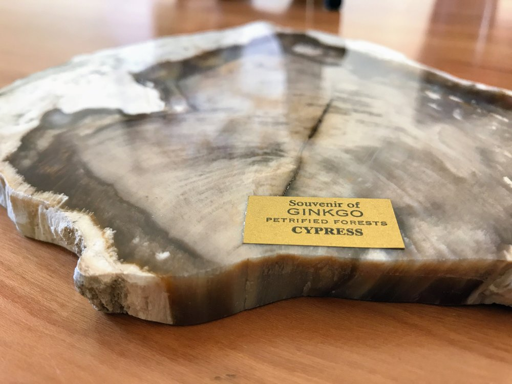 Petrified Cypress from Ginkgo Gem Shop
