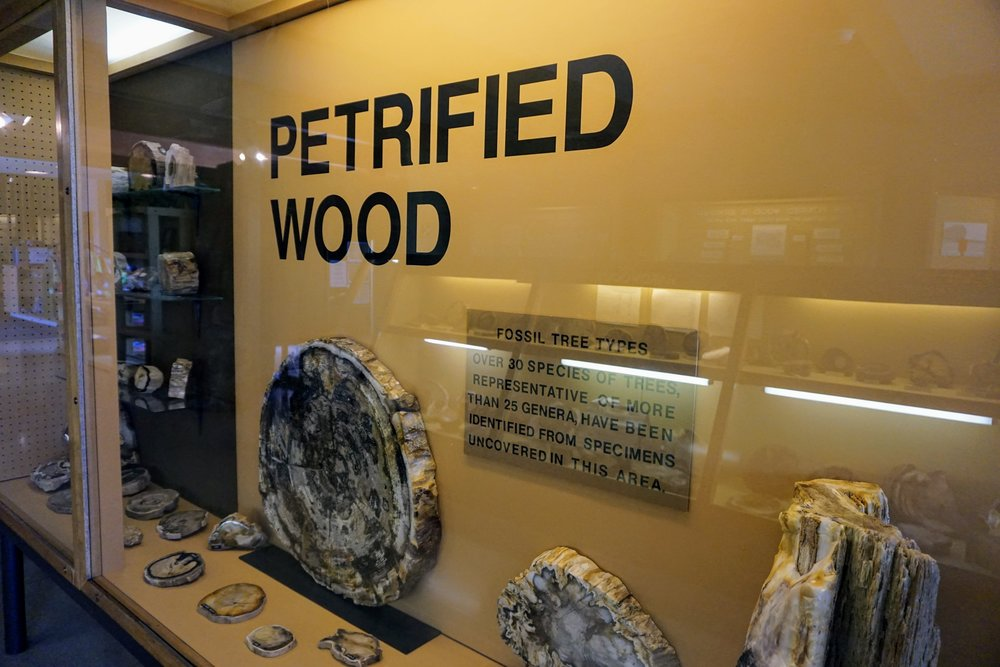Ginkgo Petrified Forest Museum