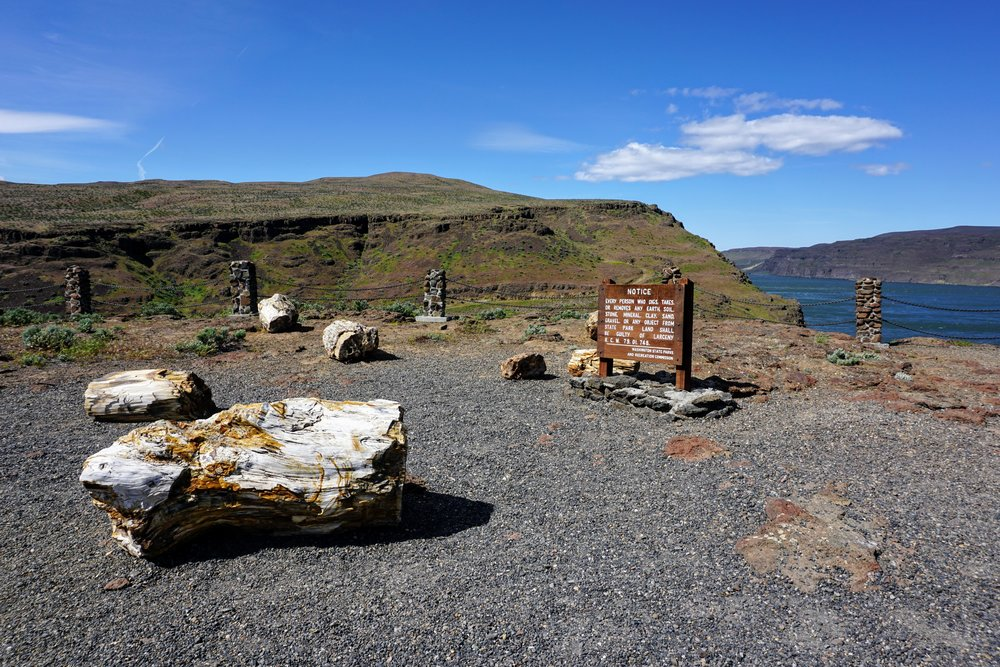 Pacific North Wanderers Visit Gingko Petrified Forest State Park