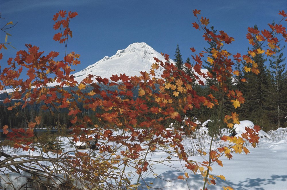 Mount Hood. Photo credit:    Wikimedia Commons