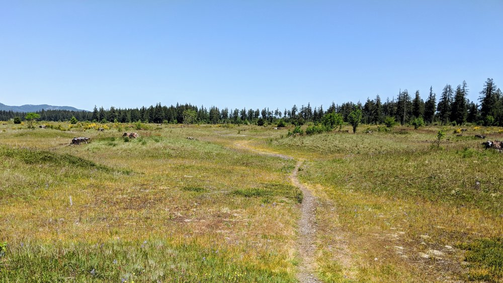 Mima Mounds Trail