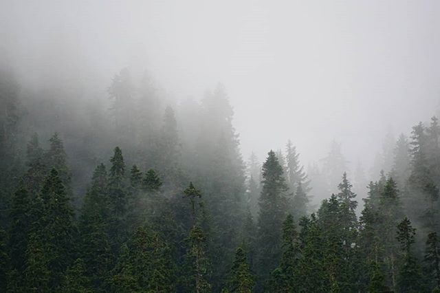 """I like the muted sounds, the shroud of grey, and the silence that comes with fog."" –Om Malik #pnw #nationalforest #fog #hiking #nature #wanderwashington #wanderlife"