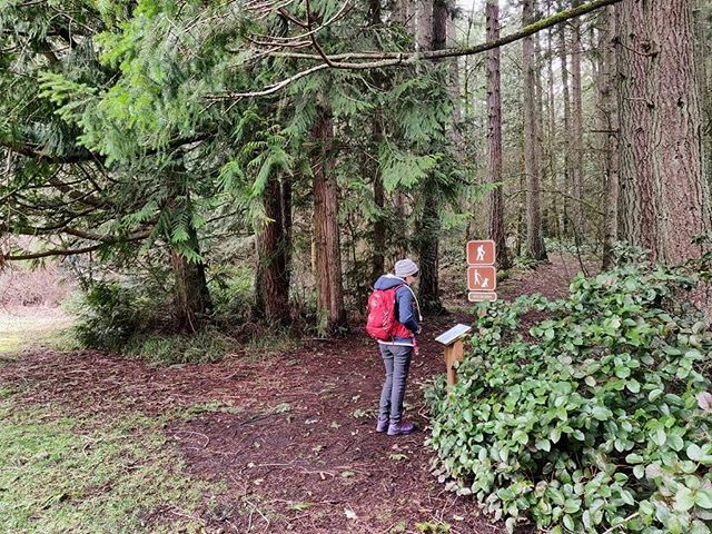Trail Report: A Hike through Millersylvania State Park 🌲 Link in bio #pnw #borninthemountains #kuhl #hiking #wastateparks #nature #millersylvaniastatepark