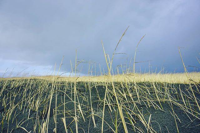 Grassy sand dunes at Twin Harbors State Park. #pnw #wastateparks #sandunes #wanderwashington #wanderlife #pacificcoast