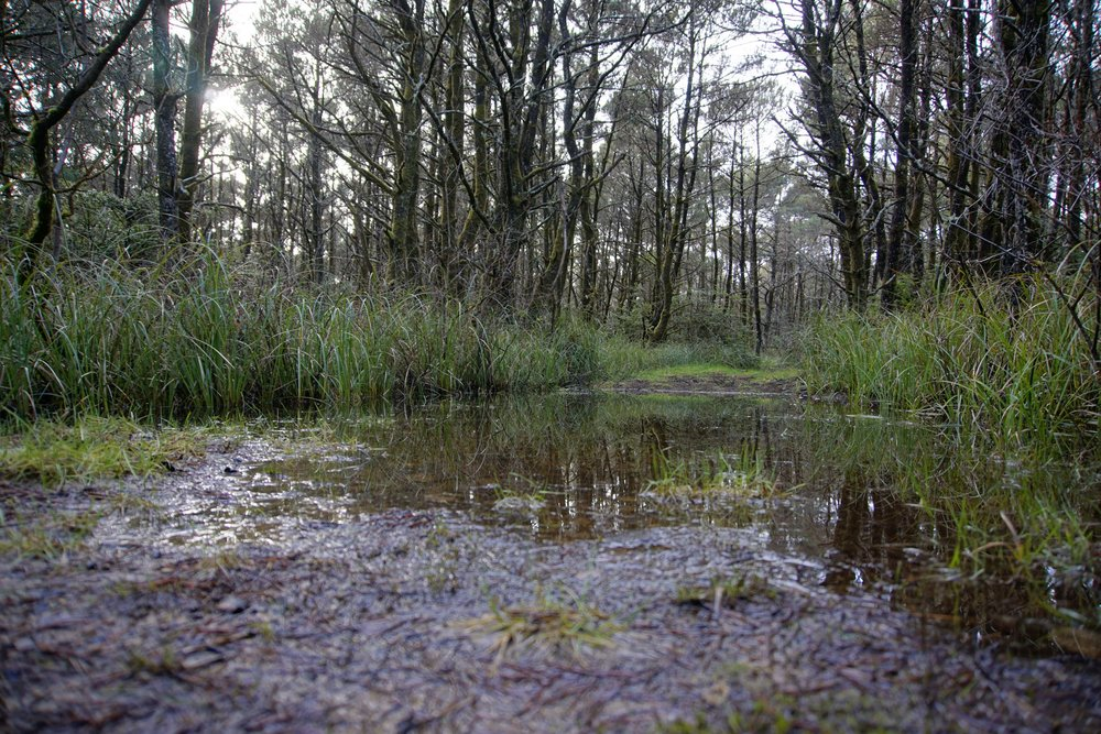 Flooded portion of Shifting Sands Trail