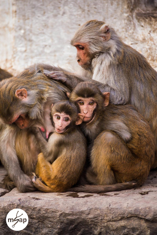 A Family of Monkeys - Brenda Ta