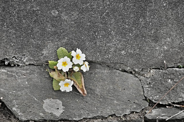 Plant Spirits & Resistance.jpg