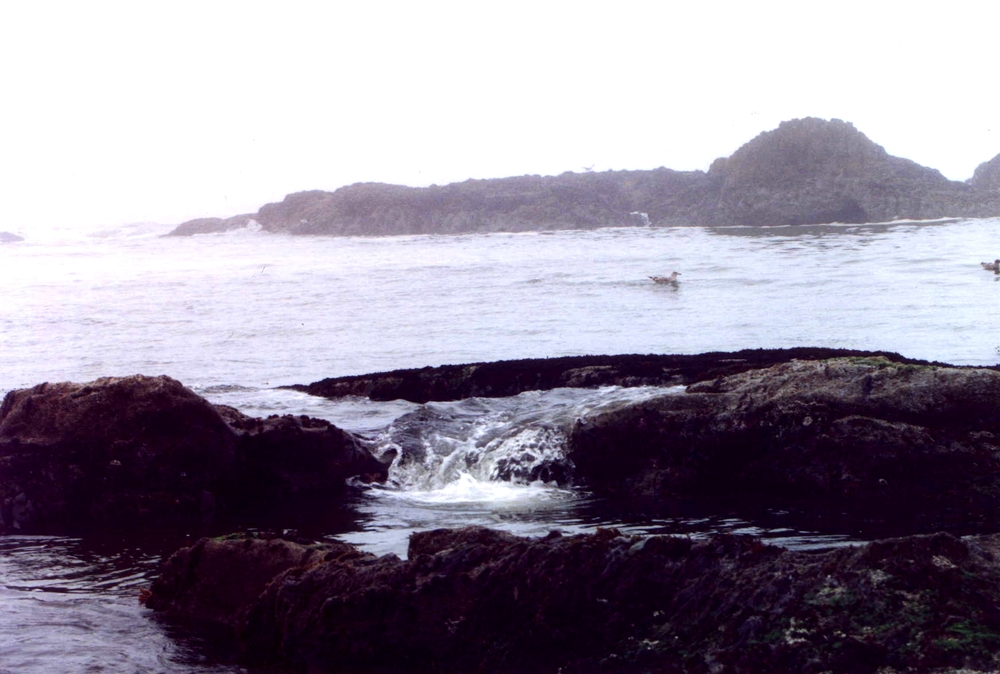 Tide Pools at Seal Rock State Park