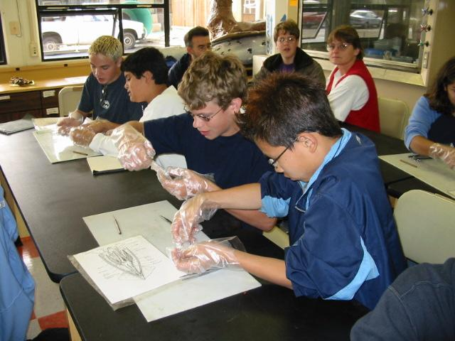 Squid Lab at Hatfield Marine Science Center