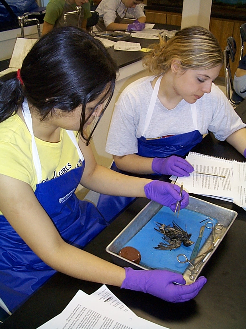 Bird_Dissection_7.jpg