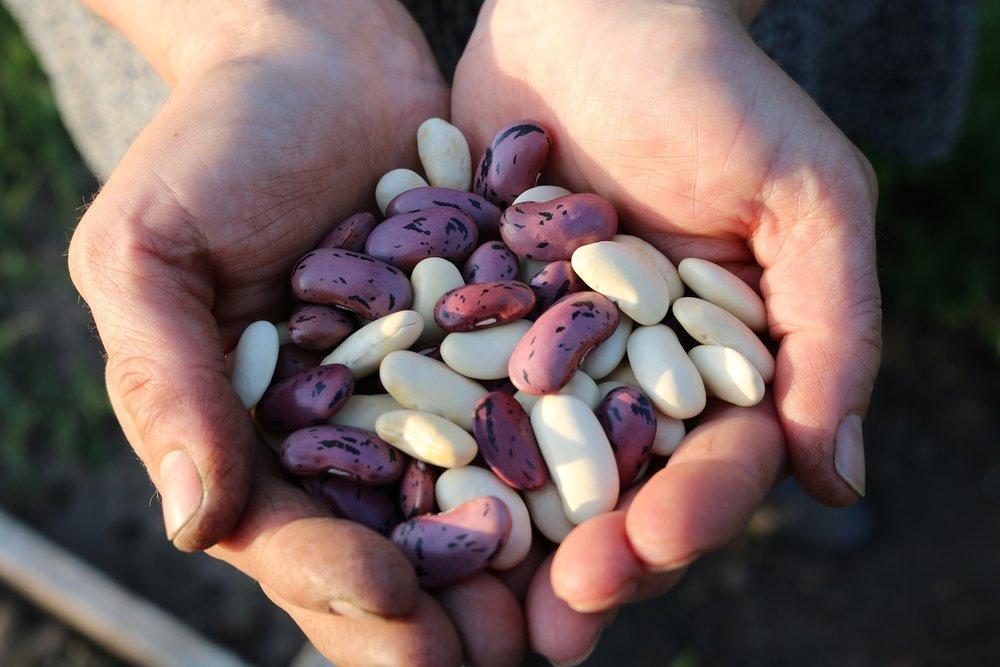 runner-beans-1835646_1920.jpg