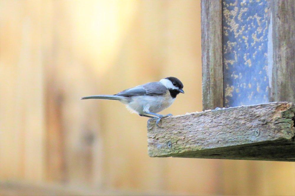 bird-2505387_1920.jpg