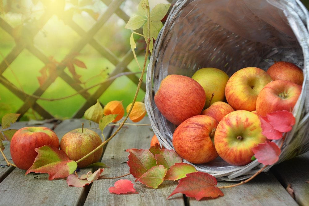 apples harvest party.jpg