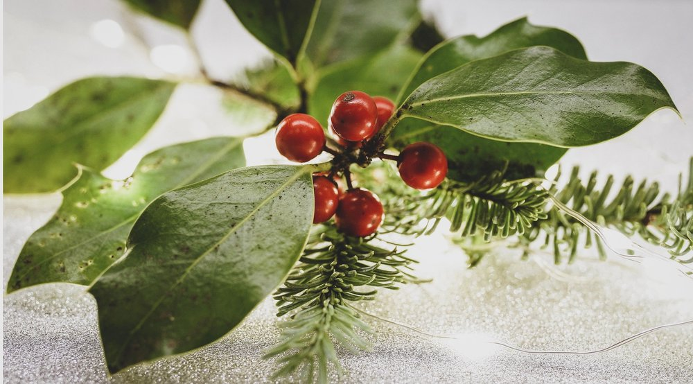 Christmas Holly.jpg