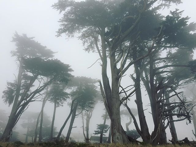 Really foggy day - Point Reyes 😍