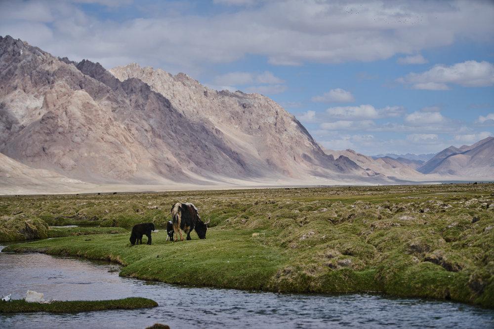 Tajikistan mountains.jpg