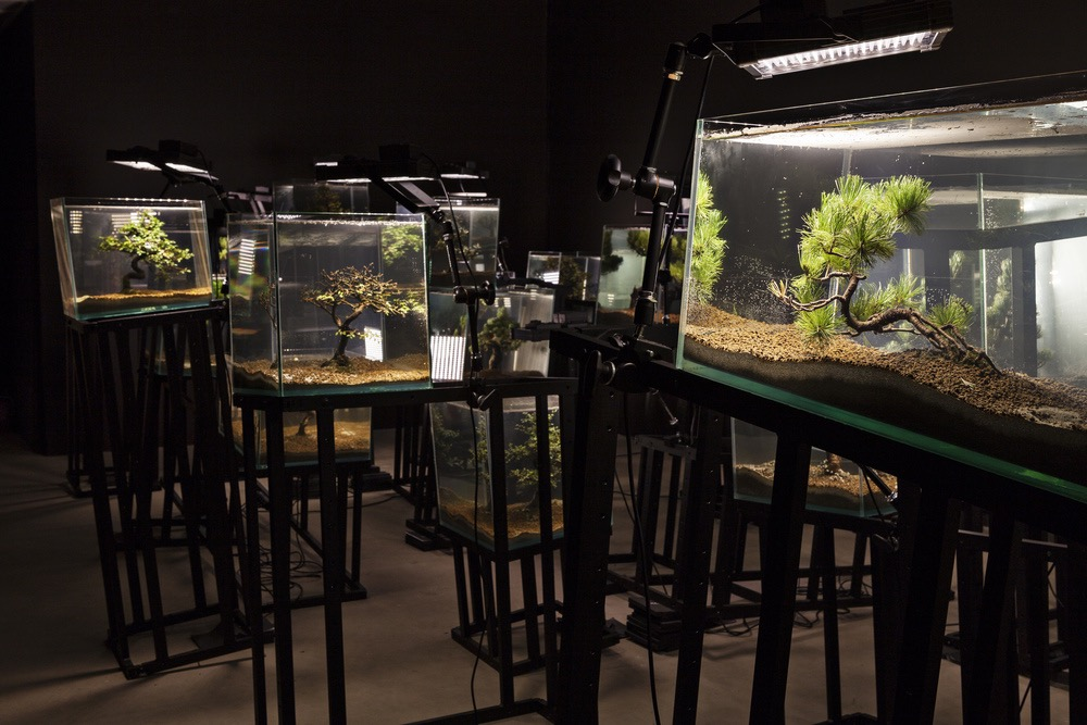 Agua con Gaz, Bernard Leroy, Ana Omandichana, Martaque, and Diederick Dewaere, 2015 (aquariums, bonsai, aluminium bases, and lights), installation view, Galleria Continua, San Gimignano / Beijing / Les Moulins / Habana. Photo by: Ela Bialkowska.