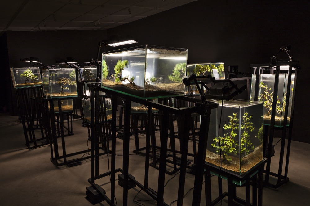 Agua con Gaz  ,   Bernard Leroy, Ana Omandichana, Martaque,   and Diederick Dewaere  , 2015 (  aquariums, bonsai, aluminium bases, and lights  ), installation view, Galleria Continua, San Gimignano / Beijing / Les Moulins / Habana. Photo by: Ela Bialkowska.
