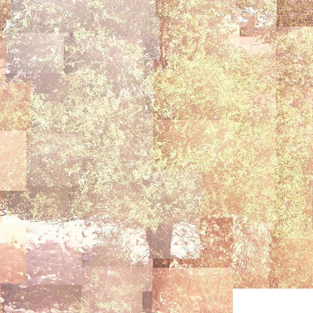 Captured via webcam, and assembled on 7 September  2016. #tree #webcam #surveillancecamera #saltlakecity #7september #summer #variousartists #jordanellestatepark #compulsive #collage #photography #nocamera #mondriaan  #raymondroussel #photocollage #nofilter