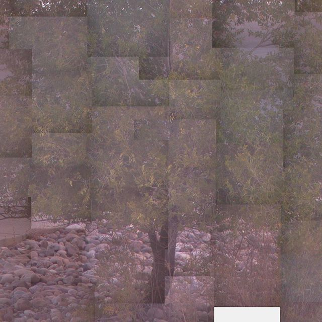 Captured via webcam, and assembled on29 September 2016. #tree #webcam #surveillancecamera #saltlakecity #29september #fall #variousartists #jordanellestatepark #compulsive #collage #photography #nocamera #mondriaan  #raymondroussel #photocollage #nofilter