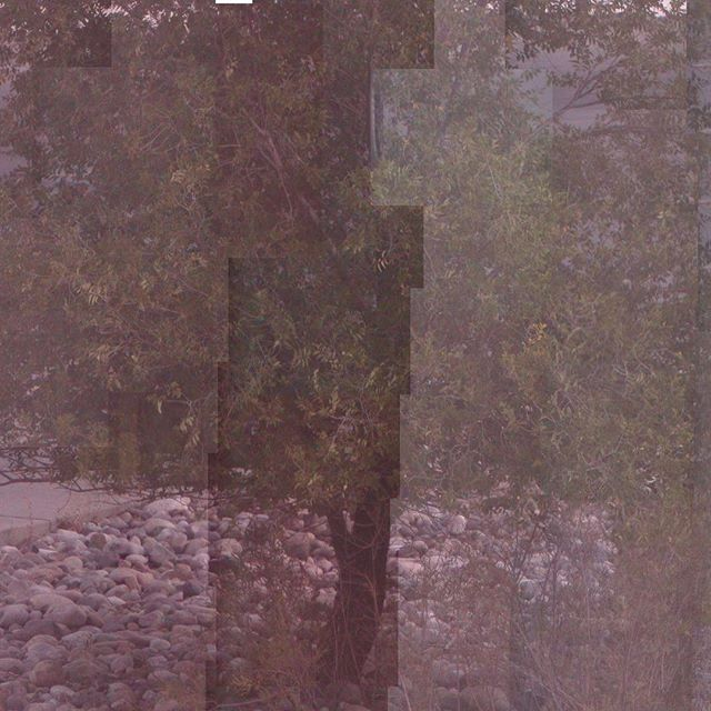 Captured via webcam, and assembled on October 1, 2016. #tree #webcam #surveillancecamera #saltlakecity #1october #fall #variousartists #jordanellestatepark #compulsive #collage #photography #nocamera #mondriaan  #raymondroussel #photocollage #nofilter