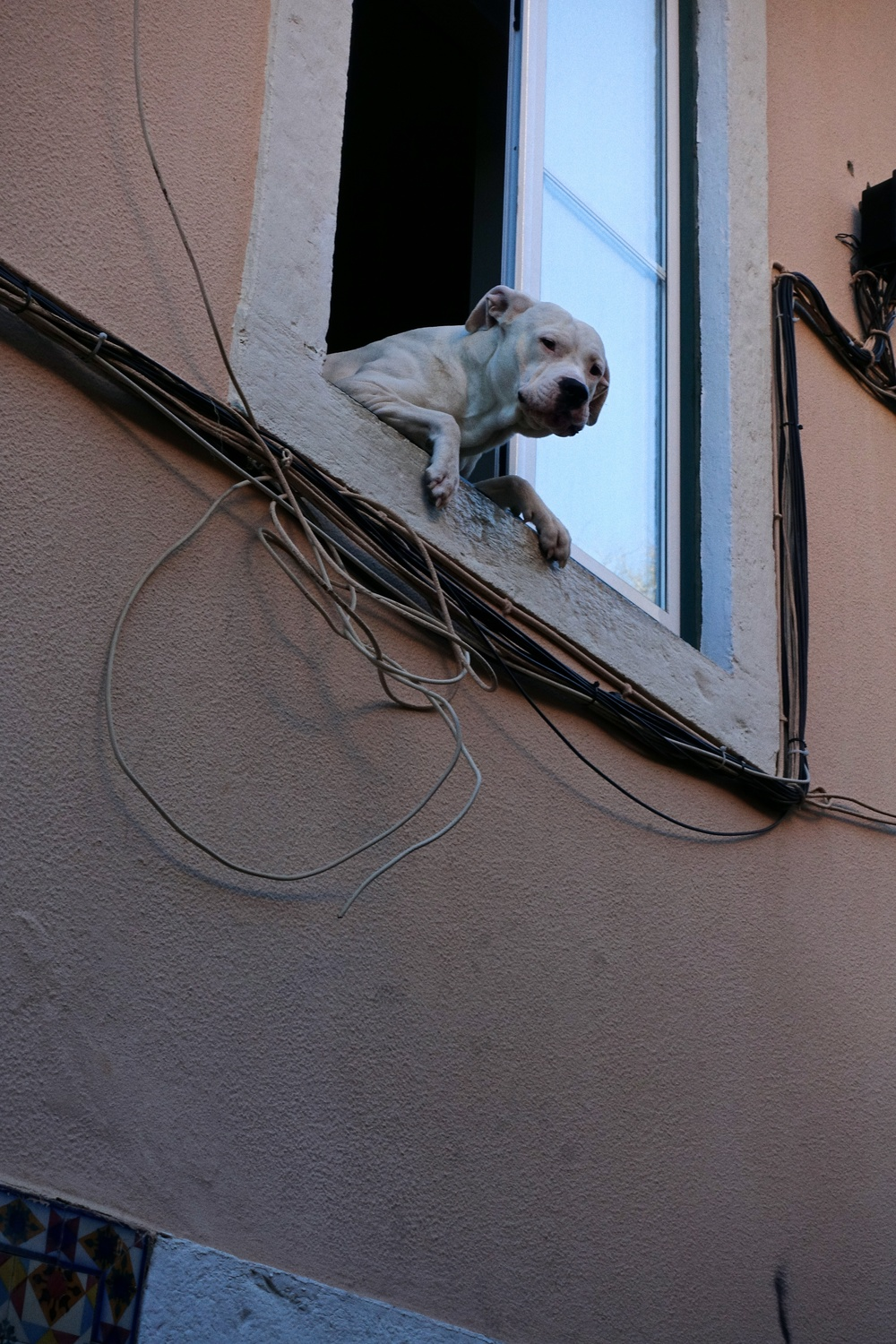 dog in alfama