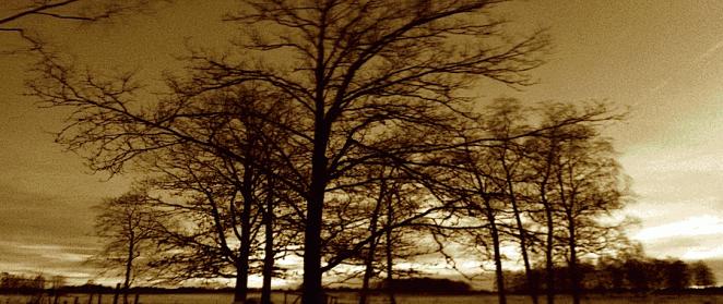 Swedensfoto1-662x279.png